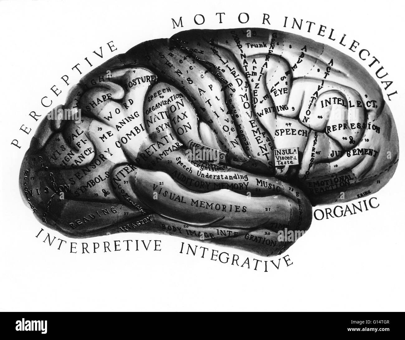Illustration of the brain labeled with the functions of each area. - Stock Image