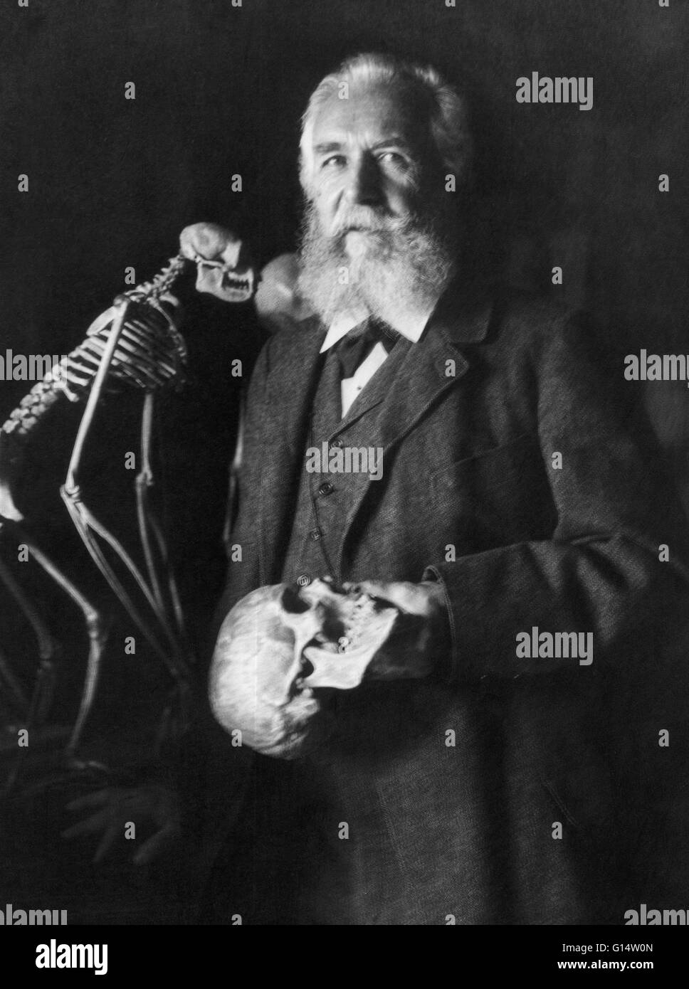 The German naturalist Ernst Haeckel (1834 - 1919) in 1906. Photograph by Nicola Perscheid. Ernst Heinrich Philipp - Stock Image