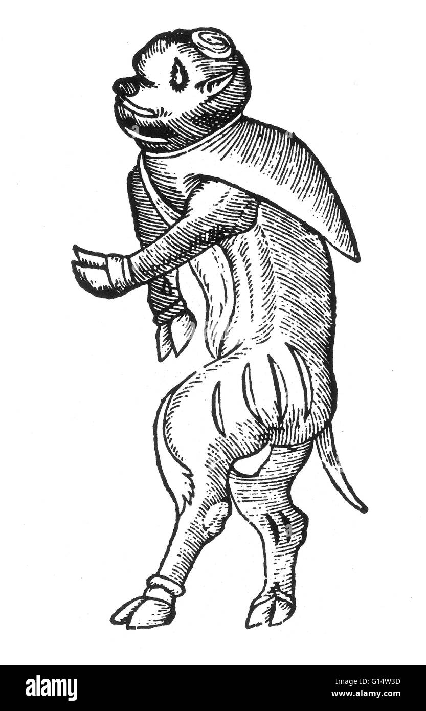 Woodcut of a 'hideous monster having the hands and feet of an ox; its eyes, mouth and nose similar to a calf, - Stock Image