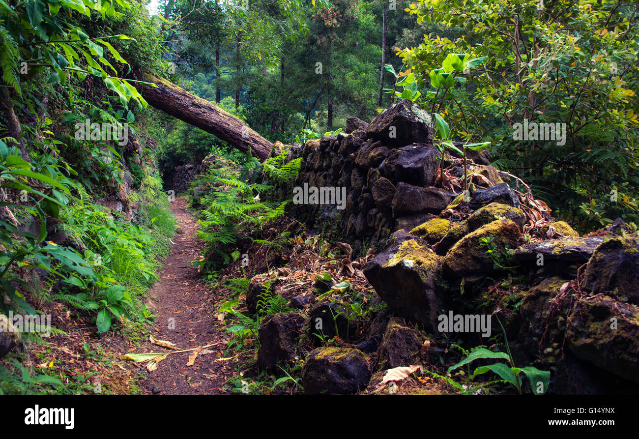 Path in the Azores to Salto do Prego waterfall, with a fallen tree and crumbling basalt stone wall. - Stock Image
