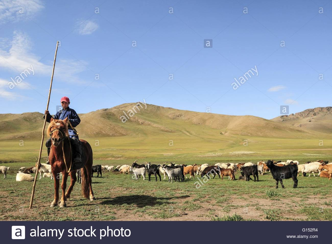 Mongolia, horserider and herd of sheeps and goats - Stock Image
