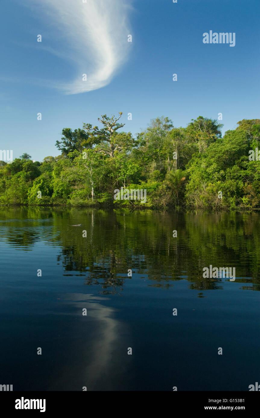 Flooded Forest, Rio Negro, Amazonia, Brazil - Stock Image