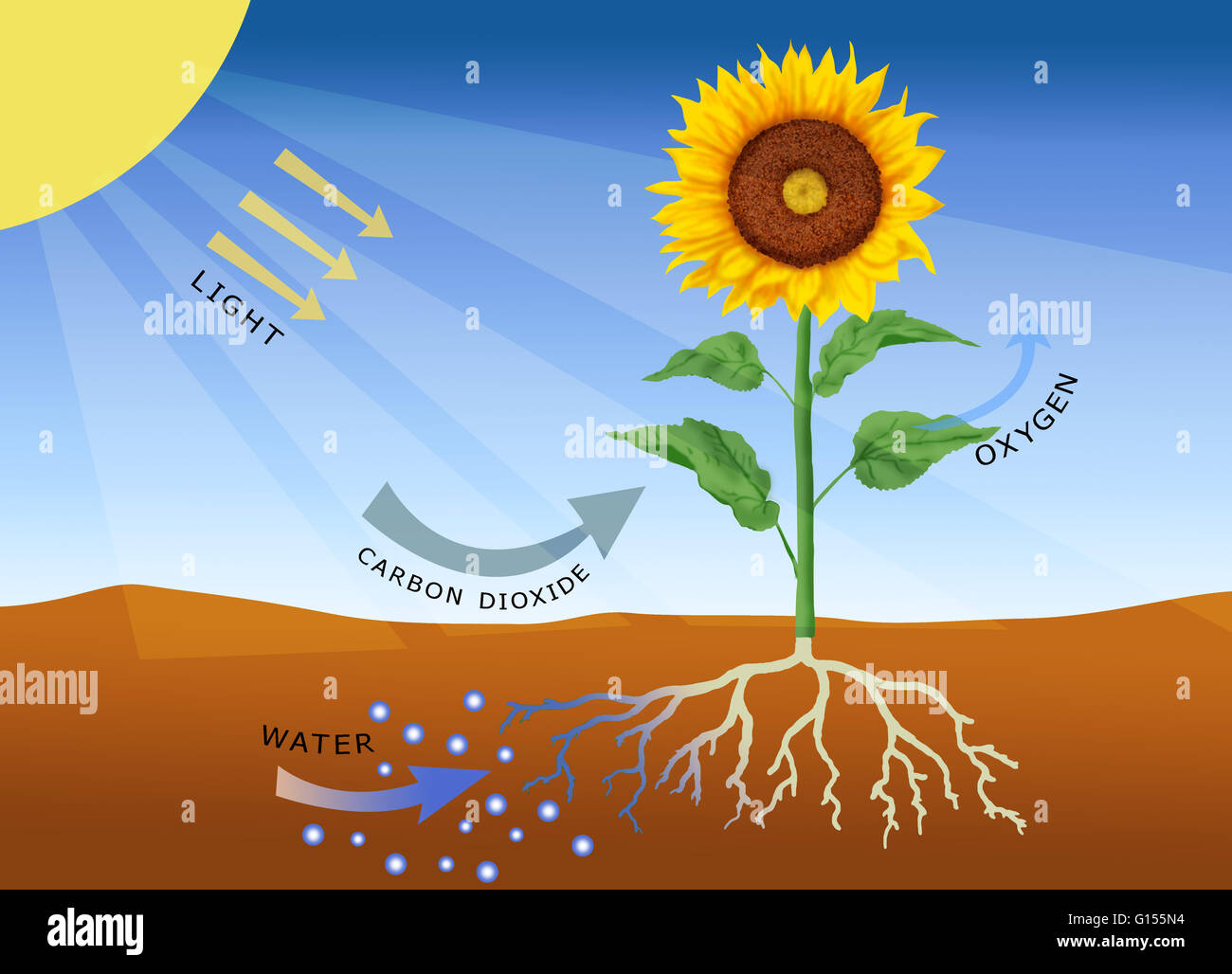 Photosynthesis- Ideas for Teaching, Resources
