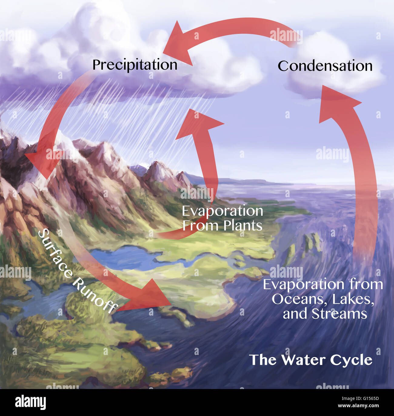 Water cycle illustration. The red arrows here show some of the ways by which water is constantly being redistributed. - Stock Image