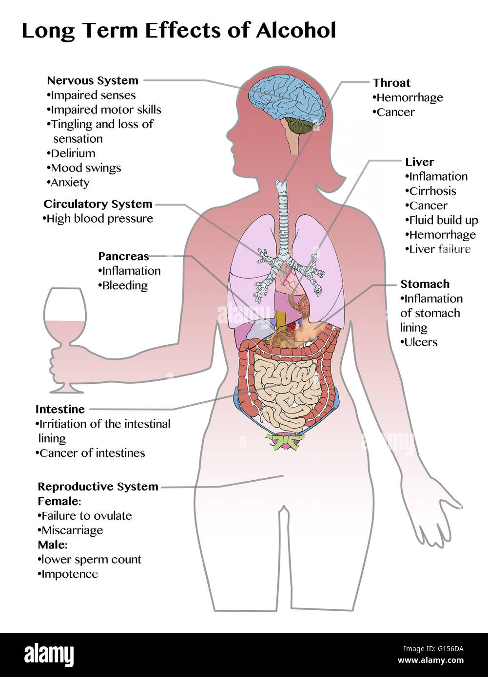 What Does Drinking Excessive Alcohol Do To Your Body
