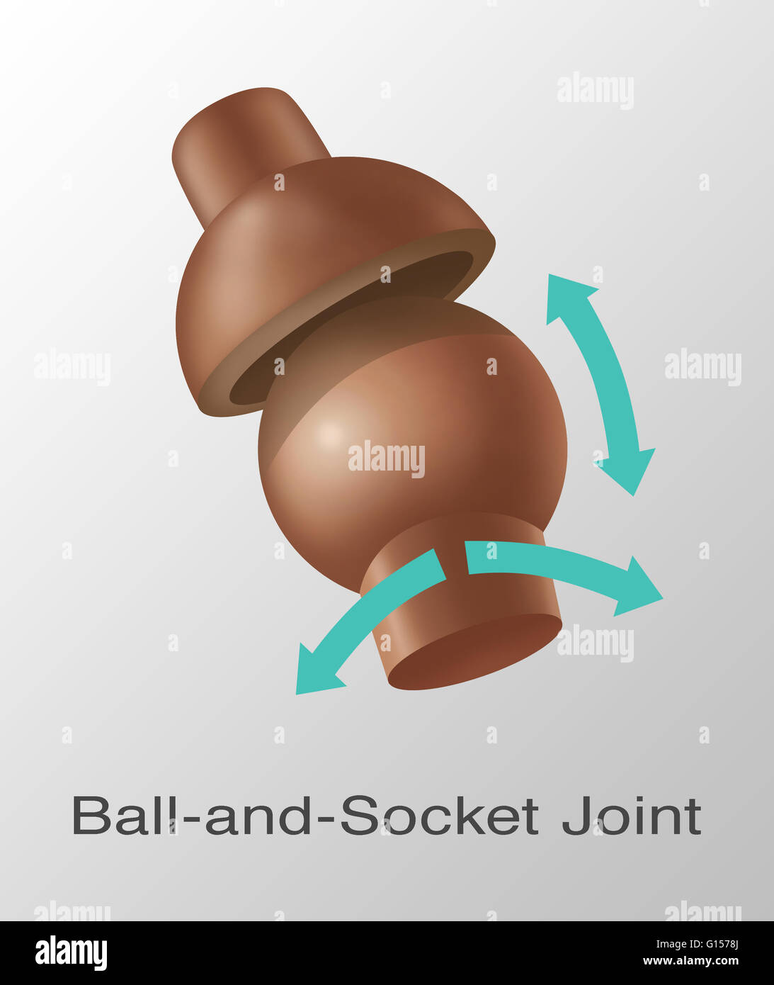 Ball And Socket Joint Stock Photos Ball And Socket Joint Stock