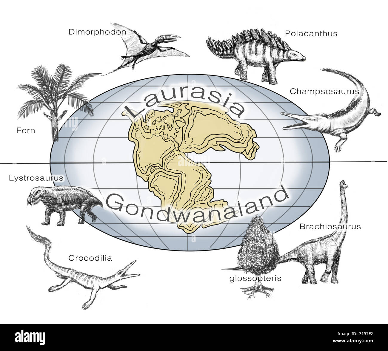 Illustration of common plants and animals on the two supercontinents Laurasia and Gondwanaland, that existed from - Stock Image