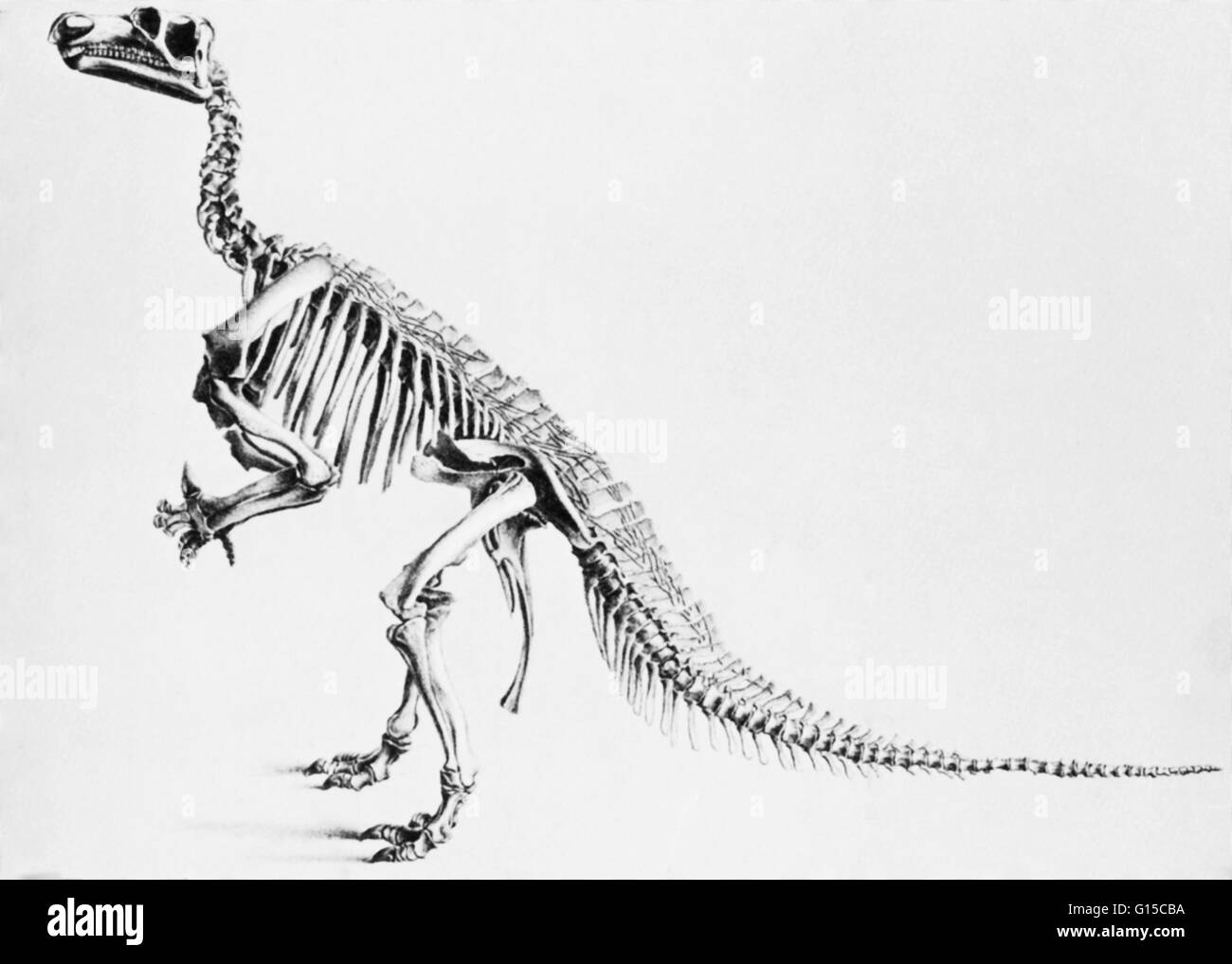 The word dinosaur was coined by Richard Owen in 1841, deinos (terrible) + sauros (lizard) which describe various - Stock Image
