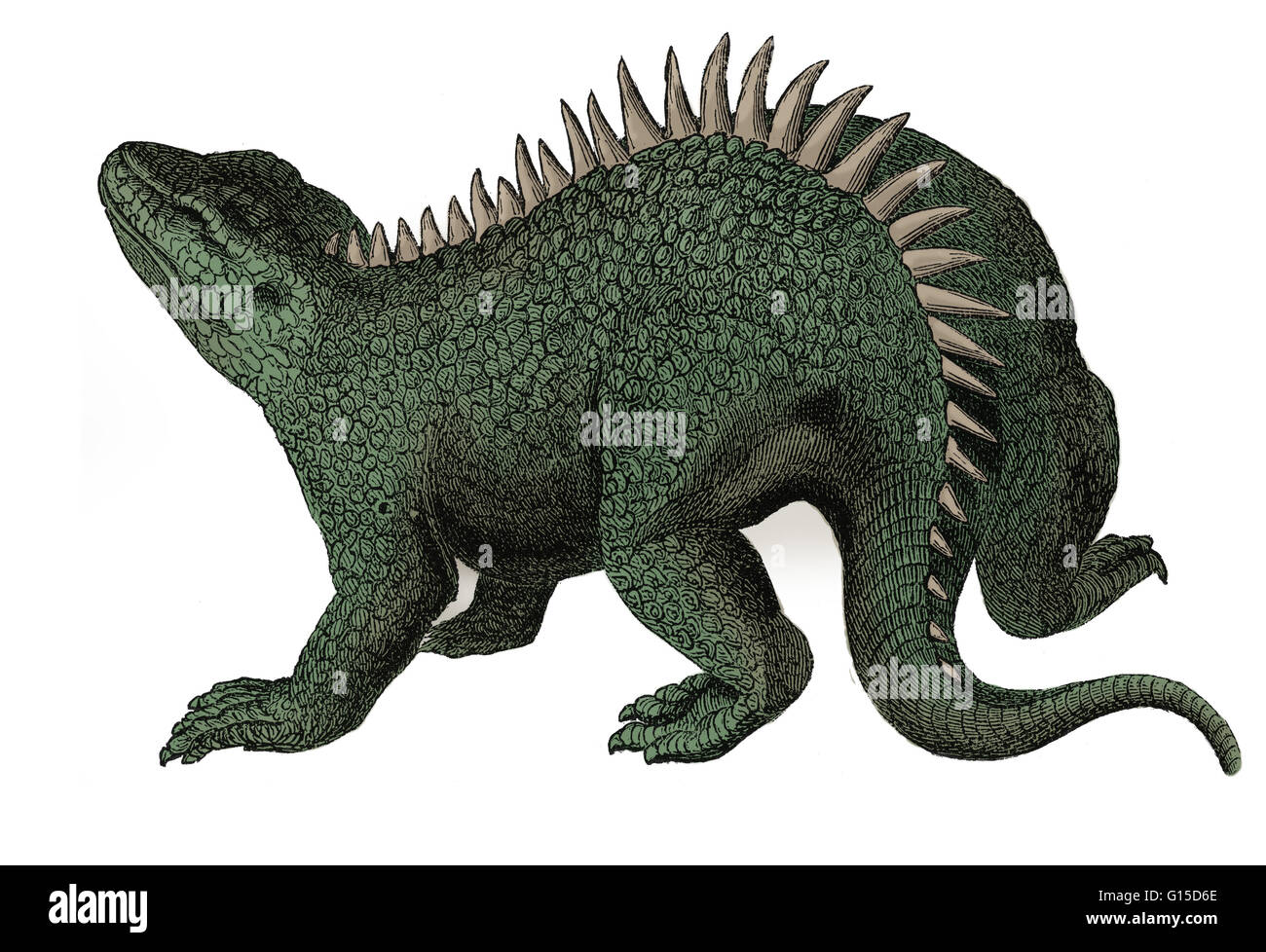Hylaeosaurus (forest lizard) is the most obscure of the three animals used by Richard Owen to define Dinosauria, - Stock Image