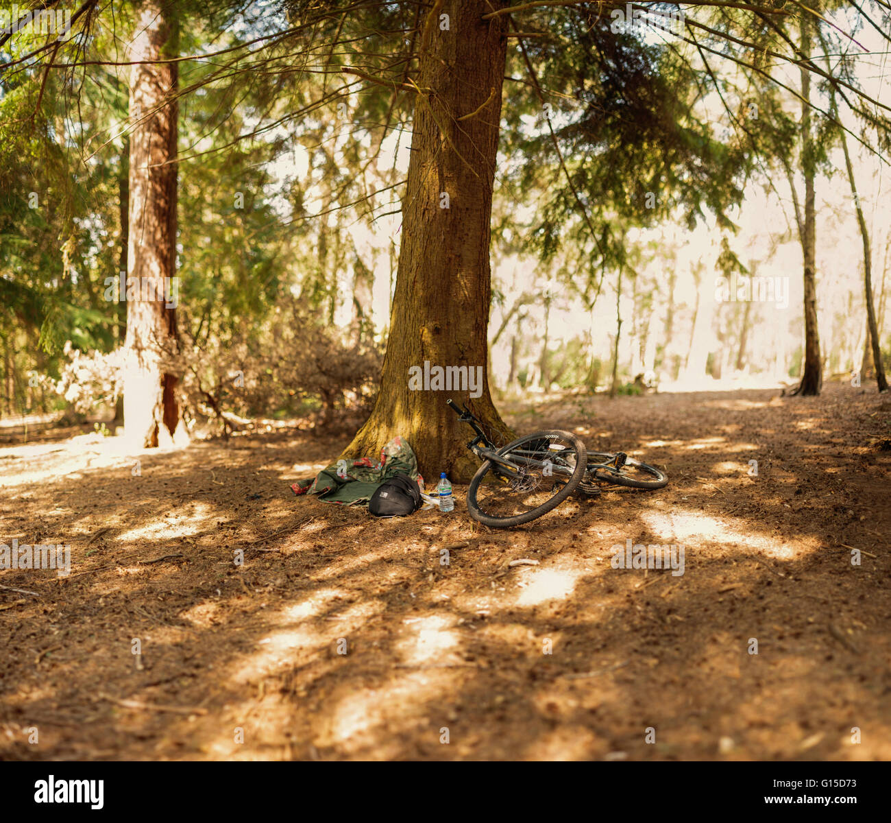 abandoned bicycle in the forest - Stock Image