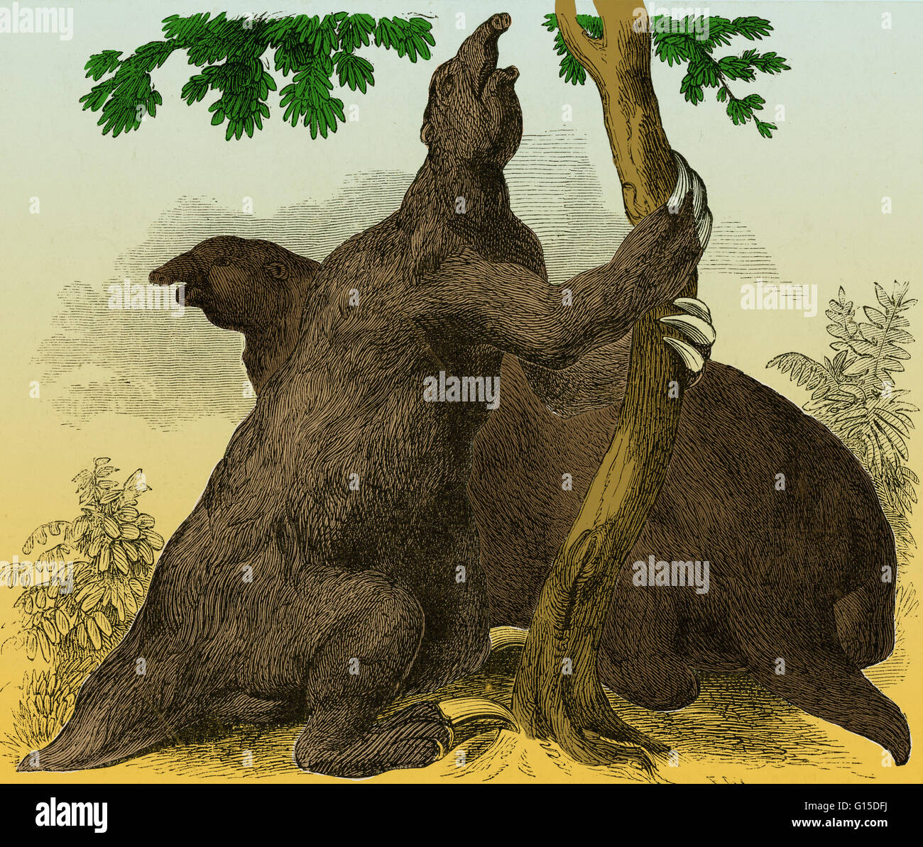 Megatherium restored, according to the designs of W. Hawkins. Megatherium (Great Beast) was a genus of elephant - Stock Image