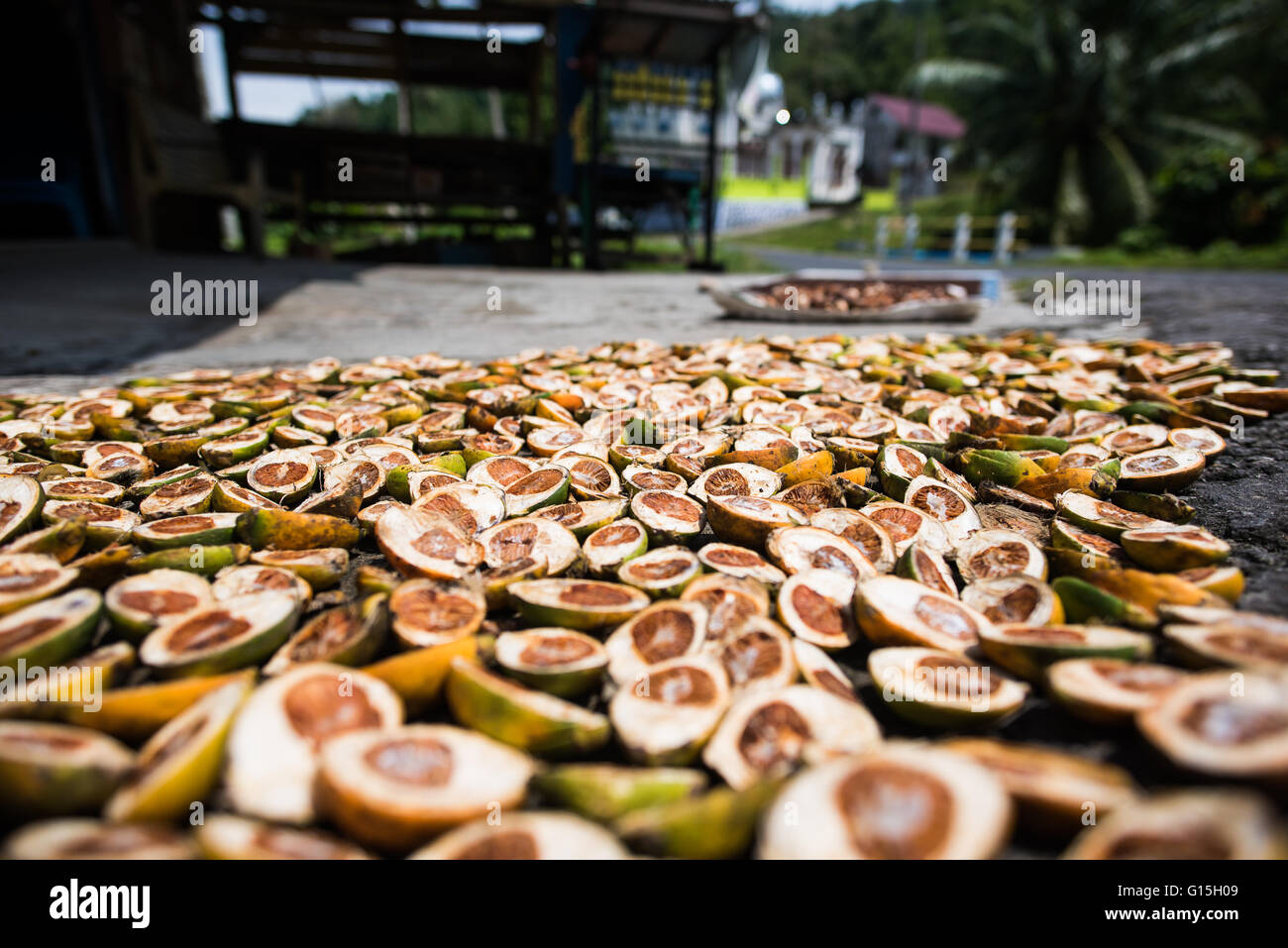 Betel nuts being sold in Pulua Weh, Sumatra, Indonesia, Southeast Asia - Stock Image