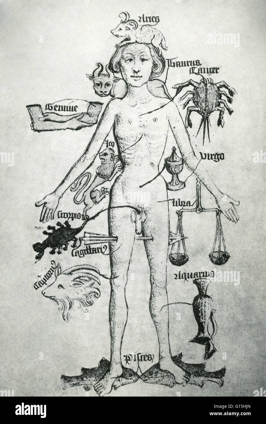 Melothesic figure from 'The Guild book of the Barber Surgeons of York', from the 16th century. The Melothesia - Stock Image