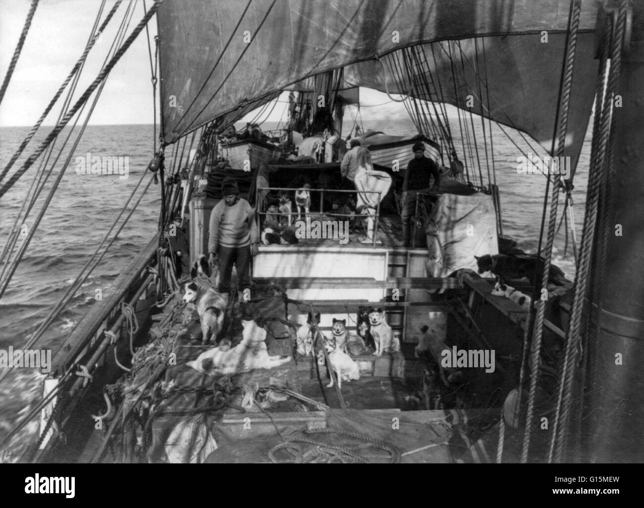 Print entitled: 'Sled dogs on the deck of the Terra Nova, 1910.' The Terra Nova (Latin for Newfoundland) - Stock Image