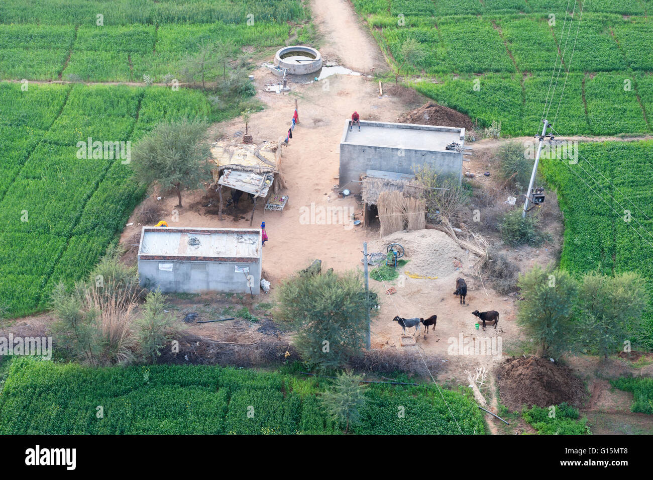 Man sitting on house roof in tiny agricultural hamlet amidst fields of vegetables, northeast of Jaipur, Rajasthan, - Stock Image