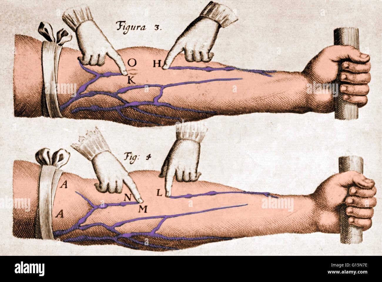William Harvey Anatomy Stock Photos & William Harvey Anatomy Stock ...