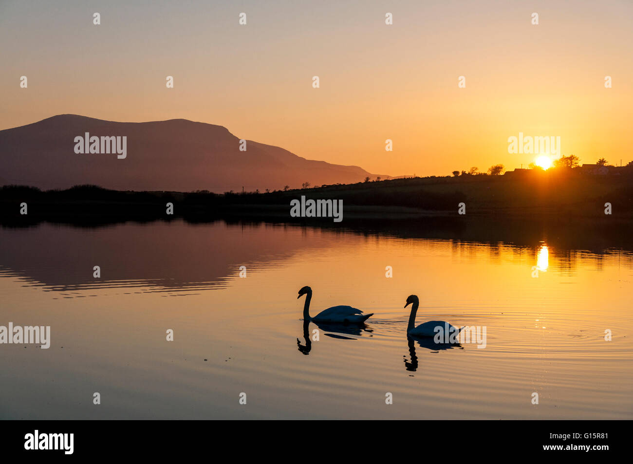 Swan Lake. Two swans on Lake Shanaghan, Ardara, County Donegal, Ireland - Stock Image