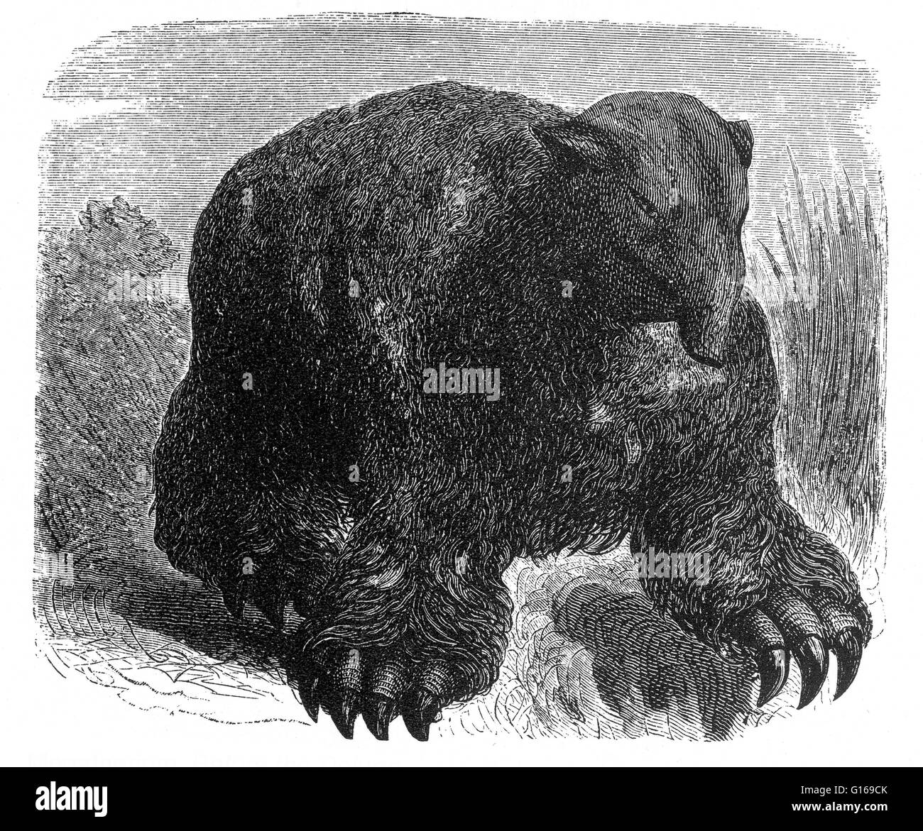 Megatherium (Great Beast) was a genus of elephant-sized ground sloths endemic to Central America and South America - Stock Image