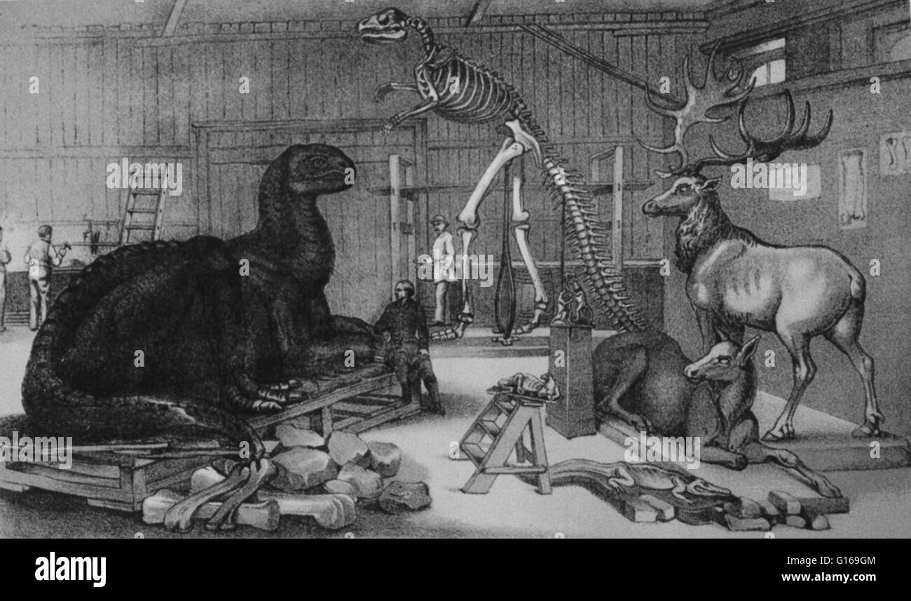 Illustration of Hawkins' studio at the Central Park Arsenal, with models of extinct animals. Benjamin Waterhouse - Stock Image