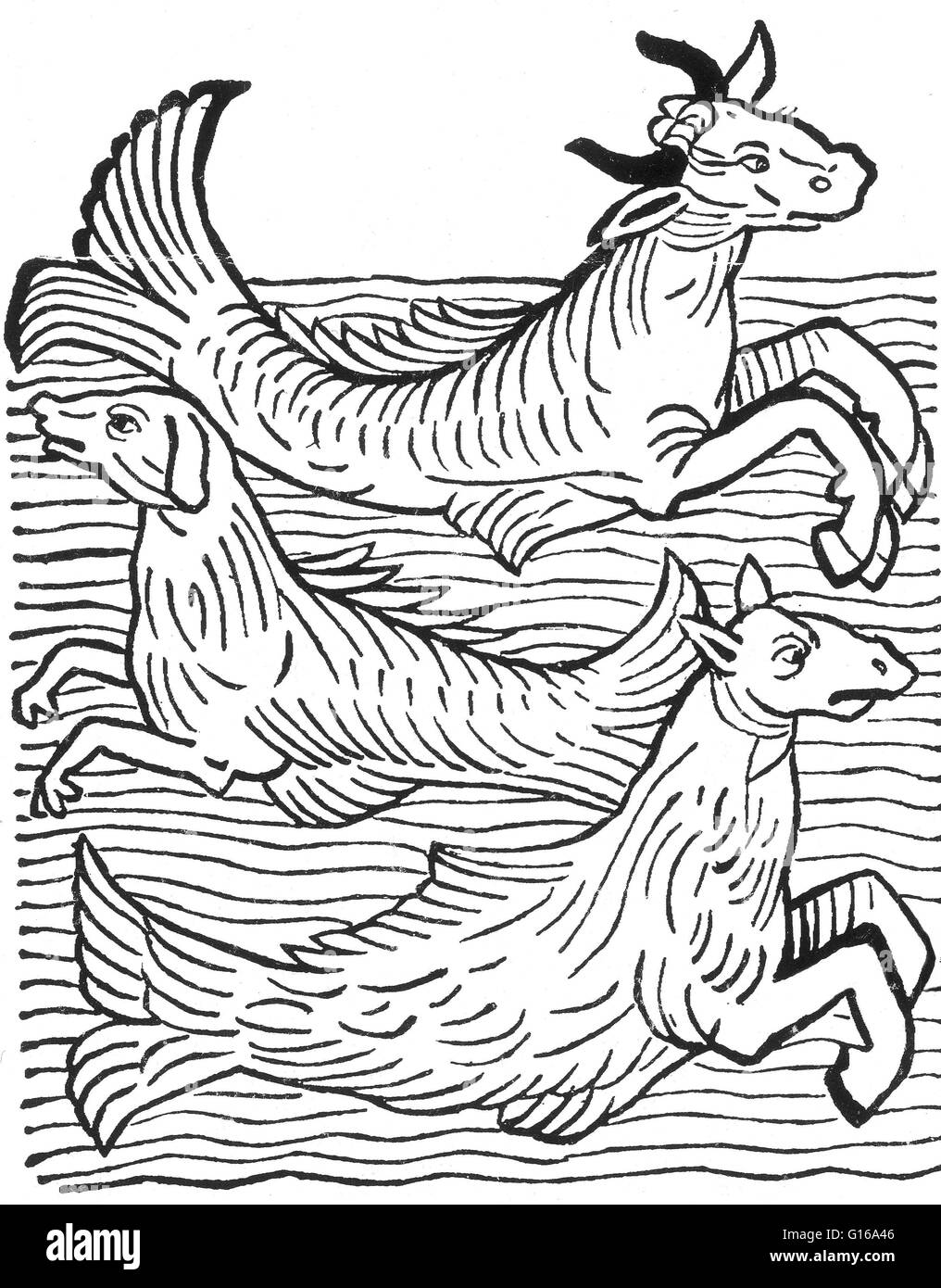 Woodcut of three mythical sea creatures from Hortus Sanitatis printed by Jacob Meyderbach, 1491. Sea cow, sea dog, - Stock Image
