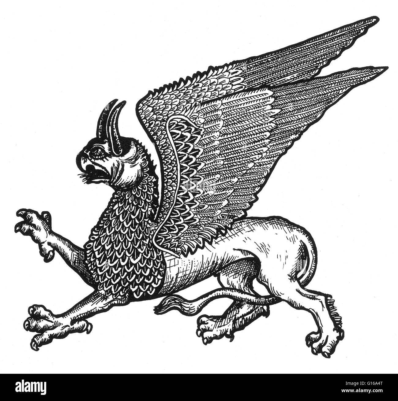 The griffin is a legendary creature with the body, tail, and back legs of a lion; the head and wings of an eagle; - Stock Image