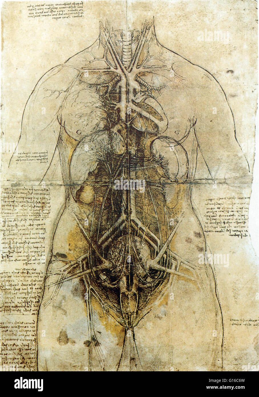 Principle organs and vascular and urogenital systems of a woman, circa 1507. Leonardo di ser Piero da Vinci (April - Stock Image