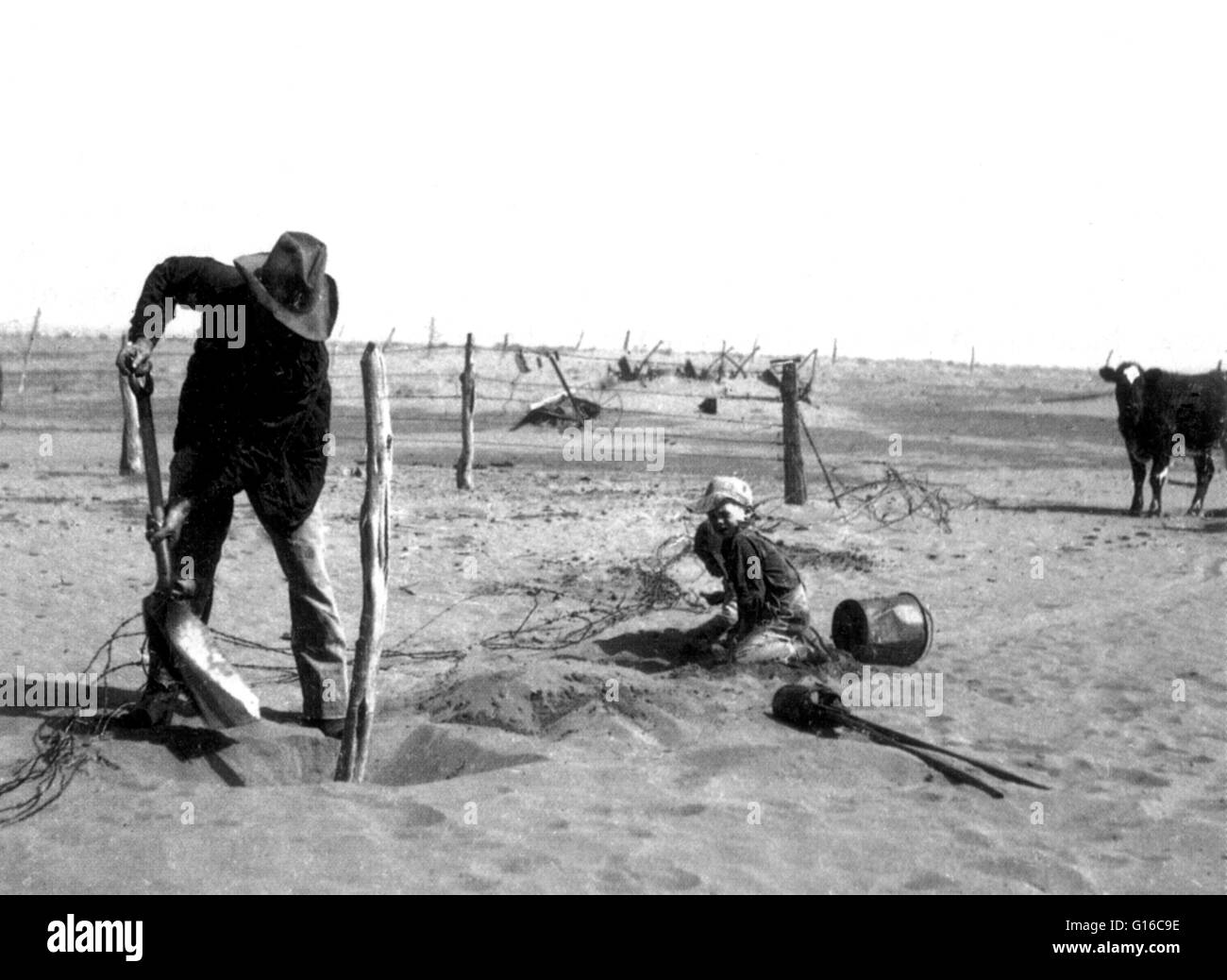 His fence overwhelmed by drifting sand, farmer digs out a post. Drought was terrible for livestock. Pastures vanished - Stock Image
