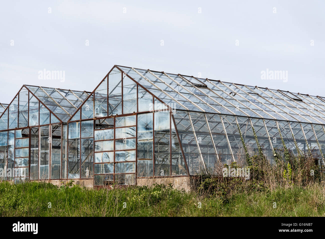 Disused glasshouses at Great Chesterford in Essex - Stock Image