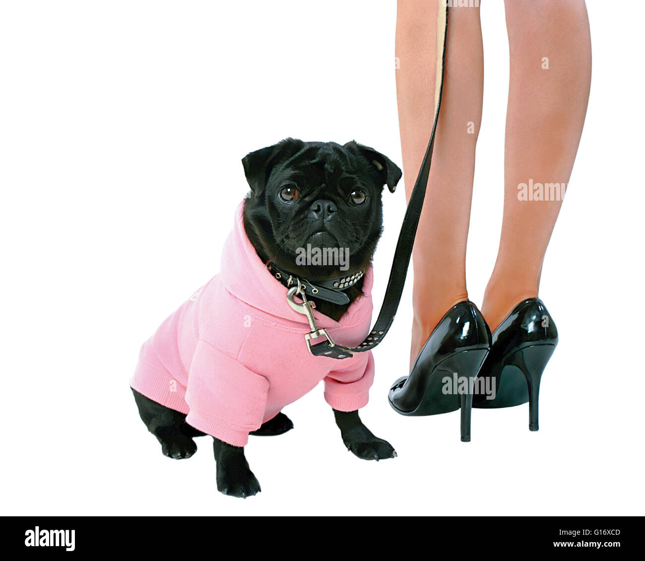 Small black pug puppy dog in pink clothes and woman in high heels isolated on white background  Model Release: Yes. - Stock Image
