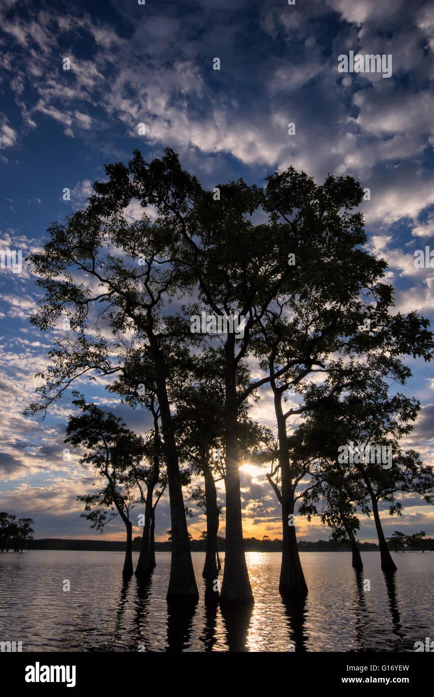 Tupelo at Sunrise - Millers Lake - Stock Image