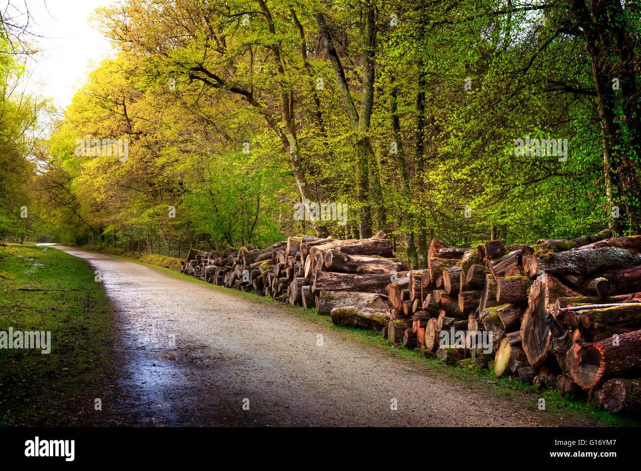 Pondhead Inclosure, Beechen Lane, New Forest, Lyndhurst, Hampshire, England - Stock Image
