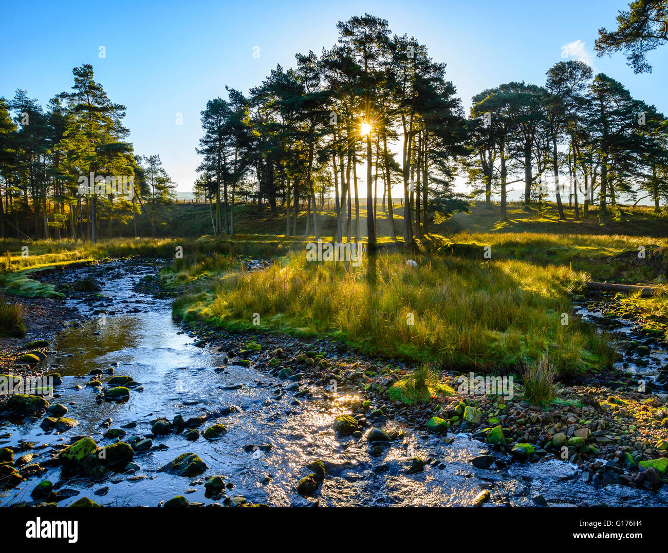 Early morning light through trees on the Marshaw Wyre river near the Trough of Bowland in the Forest of Bowland - Stock Image