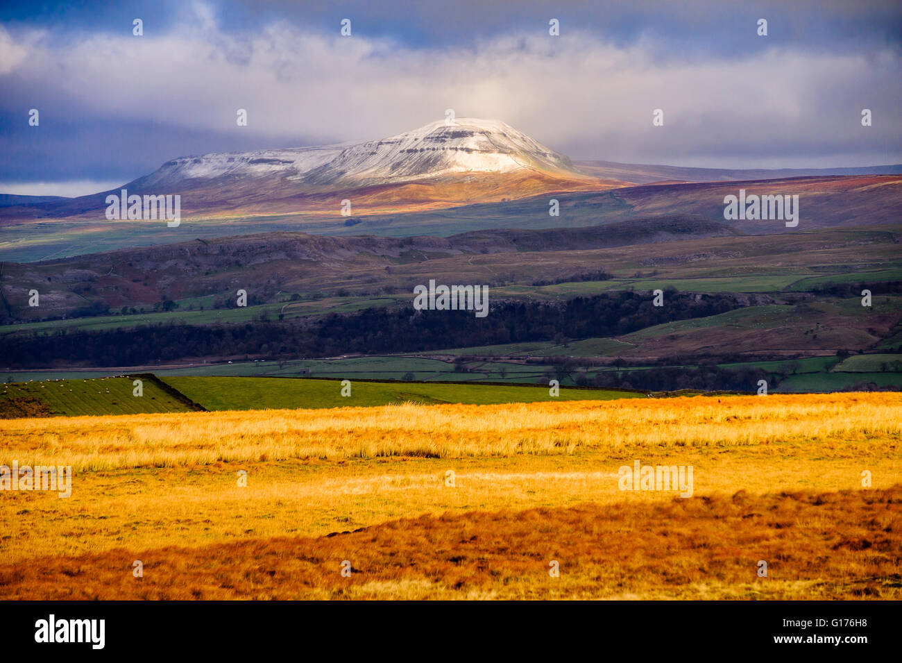 Pen-y-Ghent from Whelp Stone Crag above Gisburn Forest in the Bowland Fells Lancashire England - Stock Image