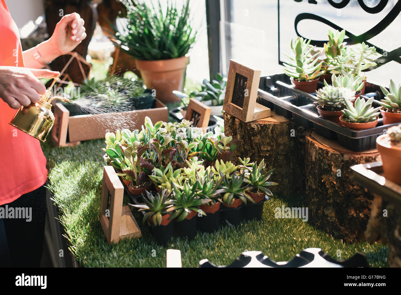 Florist watering plants in flower shop, mid section - Stock Image