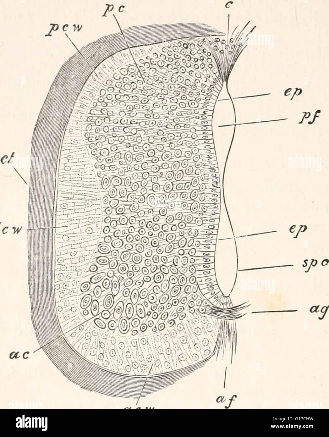 'The elements of Embryology,' (1874) - Stock Image