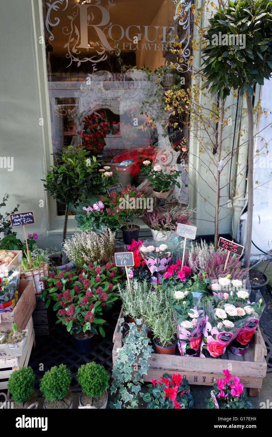 Plants outside a flower shop in the West End of Edinburgh - Stock Image