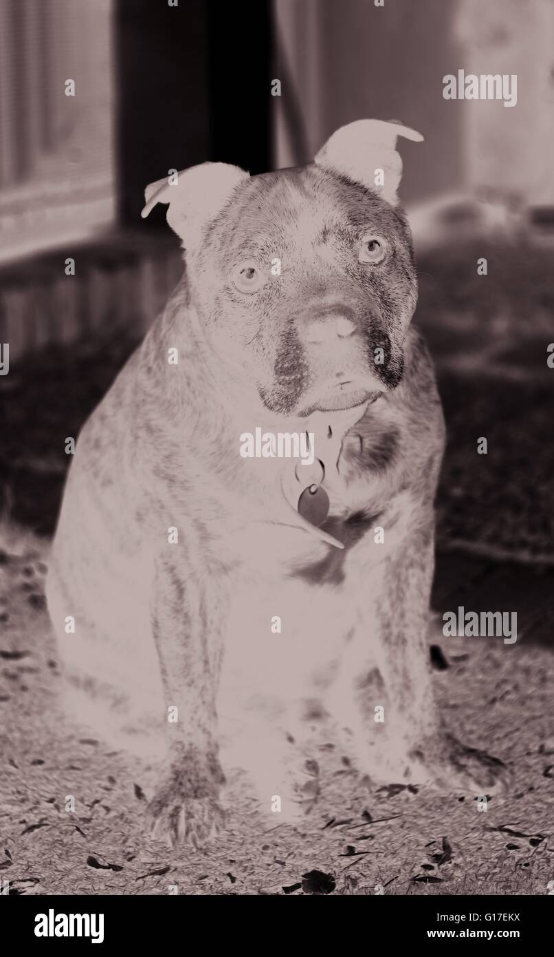 Old dog - Stock Image