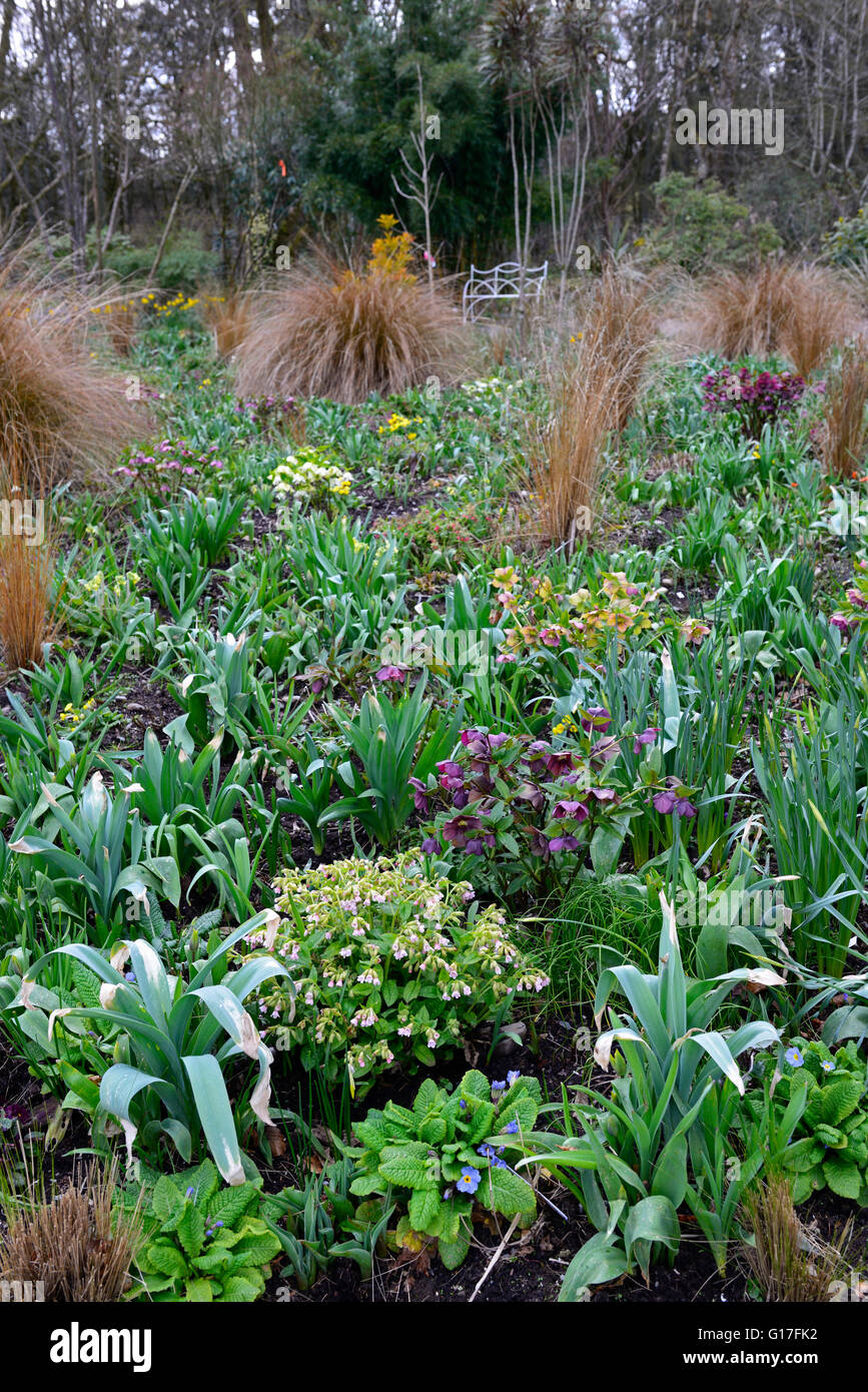 hellebores alliums tulips daffodils mix mixed bed flowerbed spring Hunting Brook Gardens Wicklow ireland Jimi Blake - Stock Image