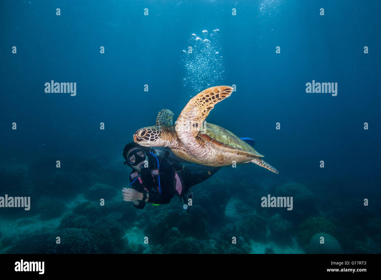 Young woman swimming with rare green sea turtle (Chelonia Mydas),, Cebu, Philippines - Stock Image