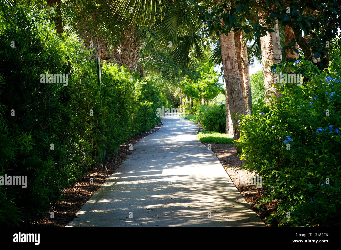 View of beautiful tree lined bike path that connects bonita springs view of beautiful tree lined bike path that connects bonita springs to naples in southwest florida in spring time with flowers a mightylinksfo