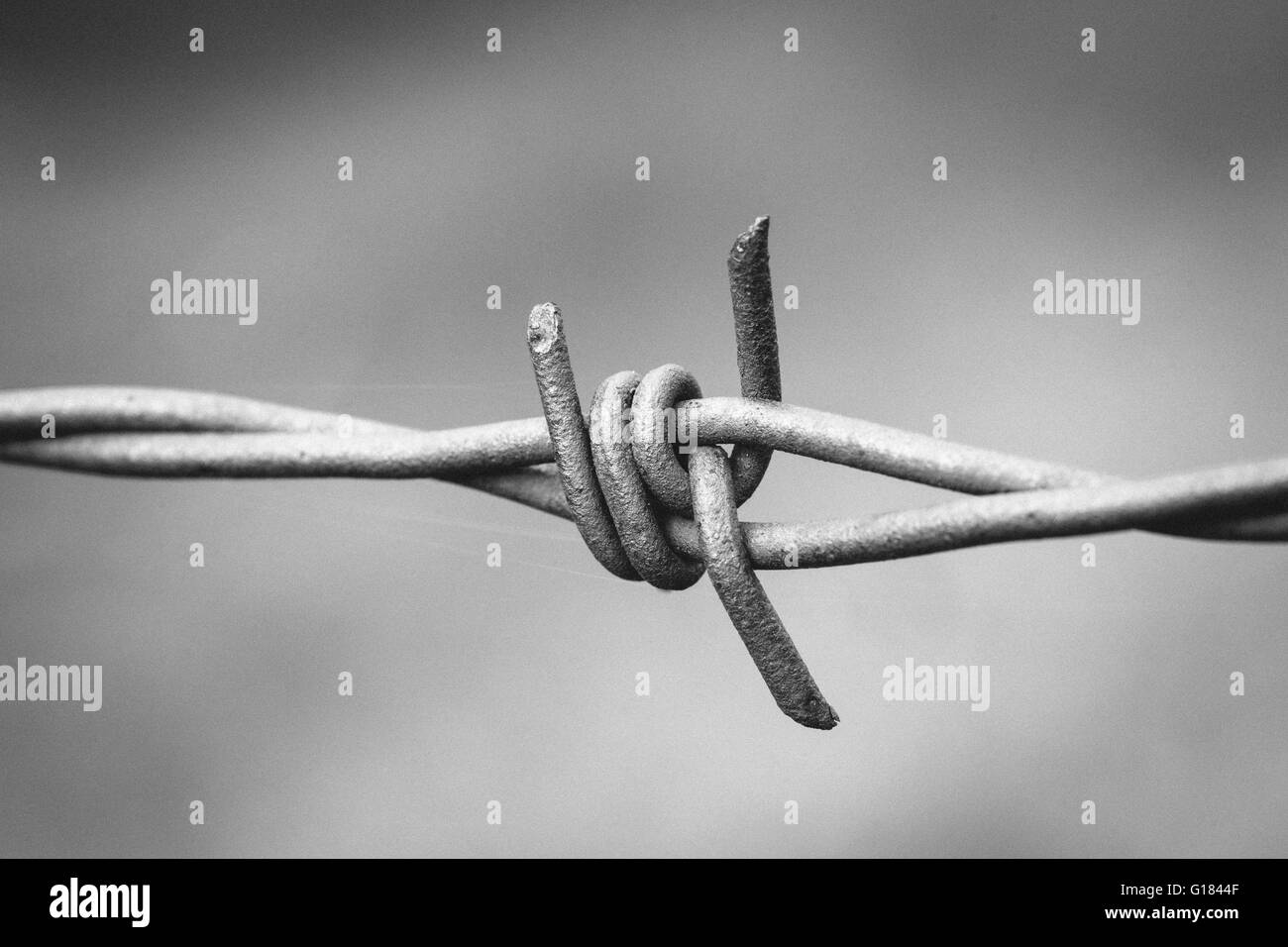 Monochrome black and white sharp spikes of a barbed wire fence. - Stock Image