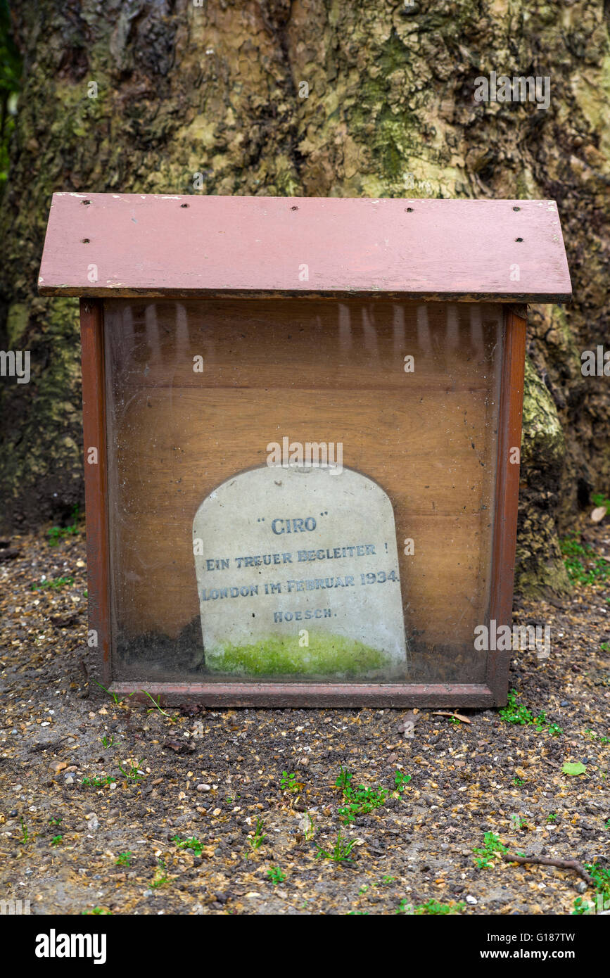 An unusual gravestone dedicated to Giro the dog along Carlton House Terrace in London. - Stock Image