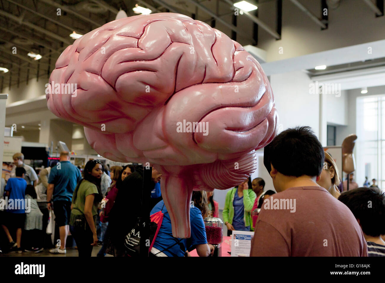 Interactive Brain Stock Photos & Interactive Brain Stock Images - Alamy
