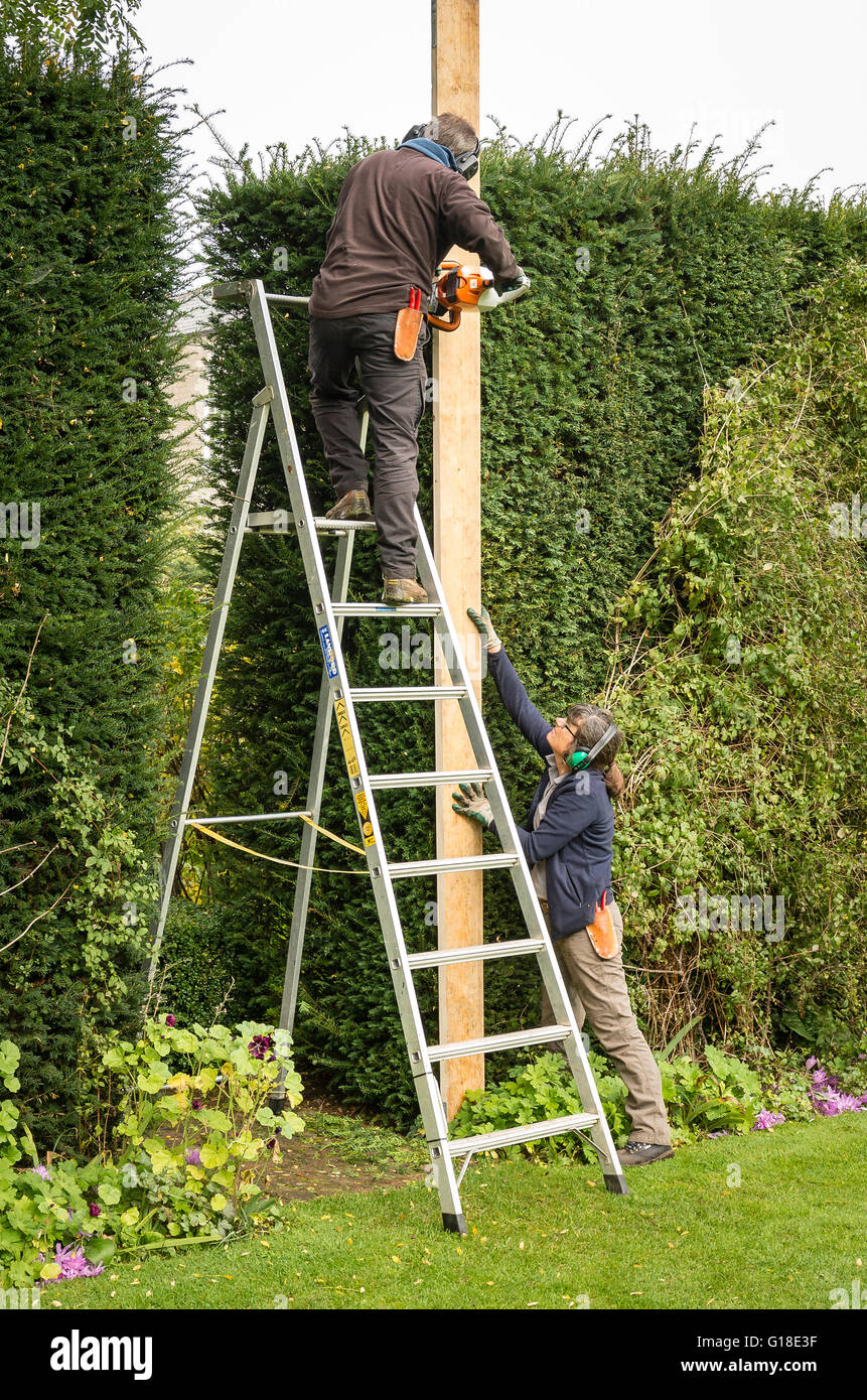 Two gardeners engaged in trimming a tall yew hedge with the aid of a straight edge - Stock Image