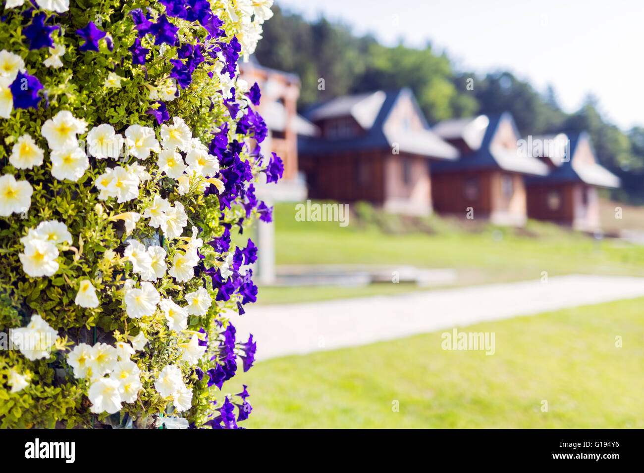Picture of flowers and cottages in  nature on a summer day - Stock Image