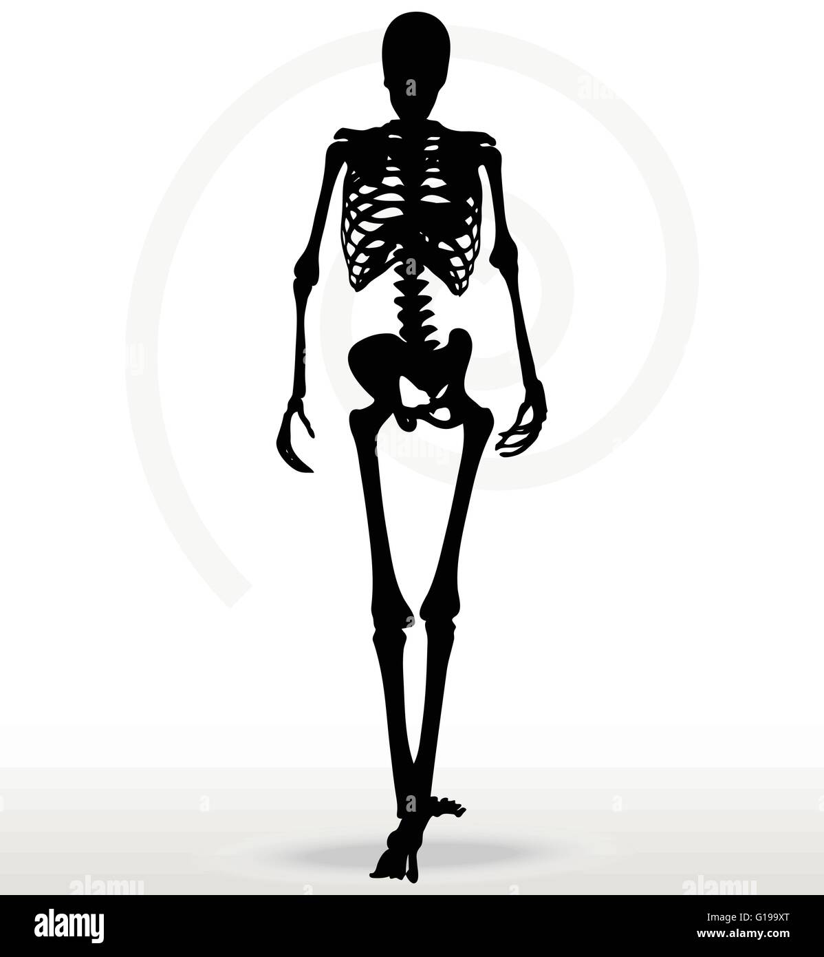 Vector Image - skeleton silhouette in walk pose isolated on white background Stock Vector