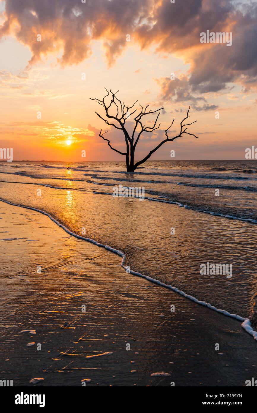 The sun rises over a lone dead oak tree on the beach in Botany Bay Plantation WMA on Edisto Island, South Carolina. - Stock Image