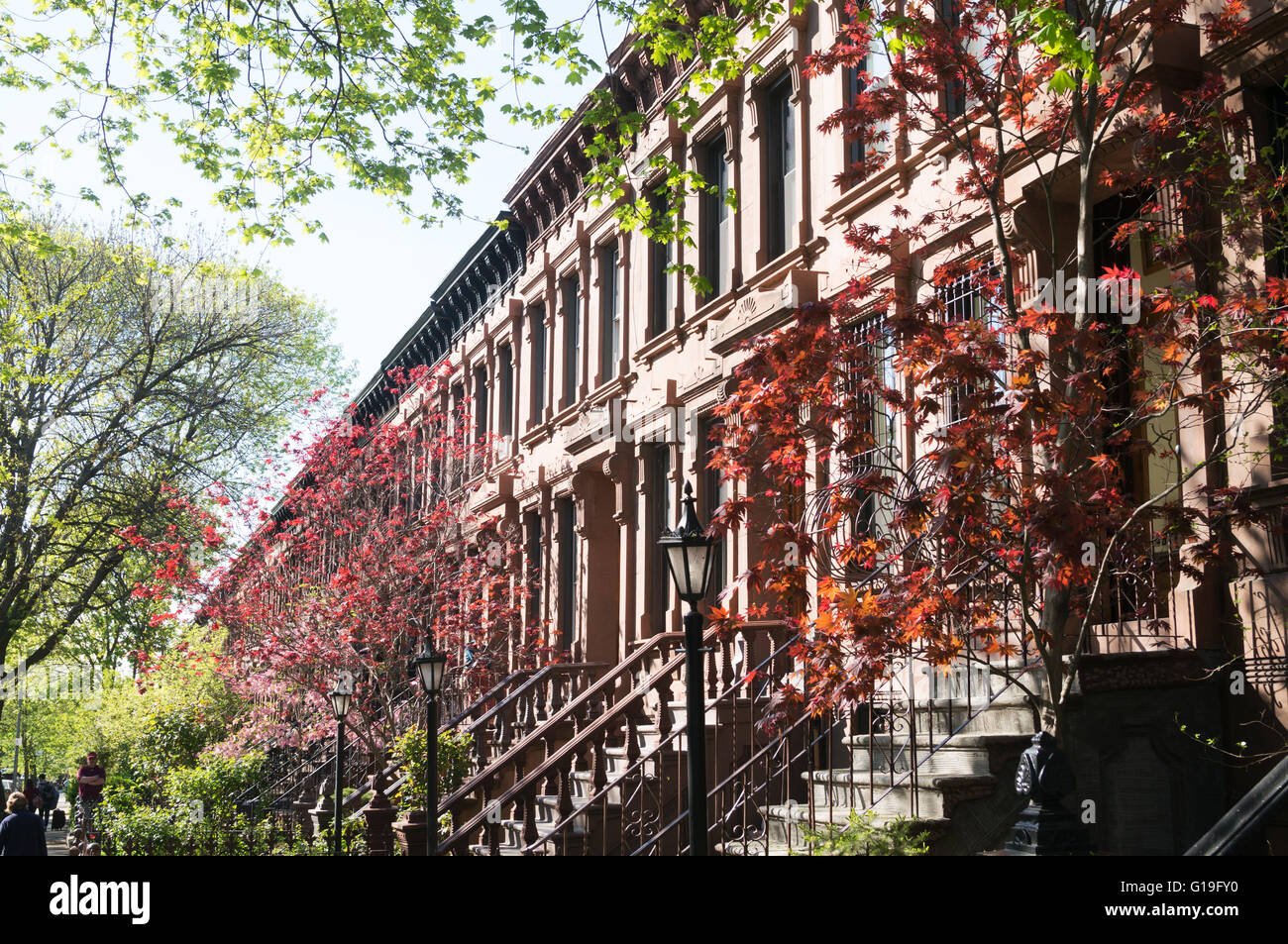 Terrace of brownstone houses with spring color, Park Slope, Brooklyn, New York, USA Stock Photo