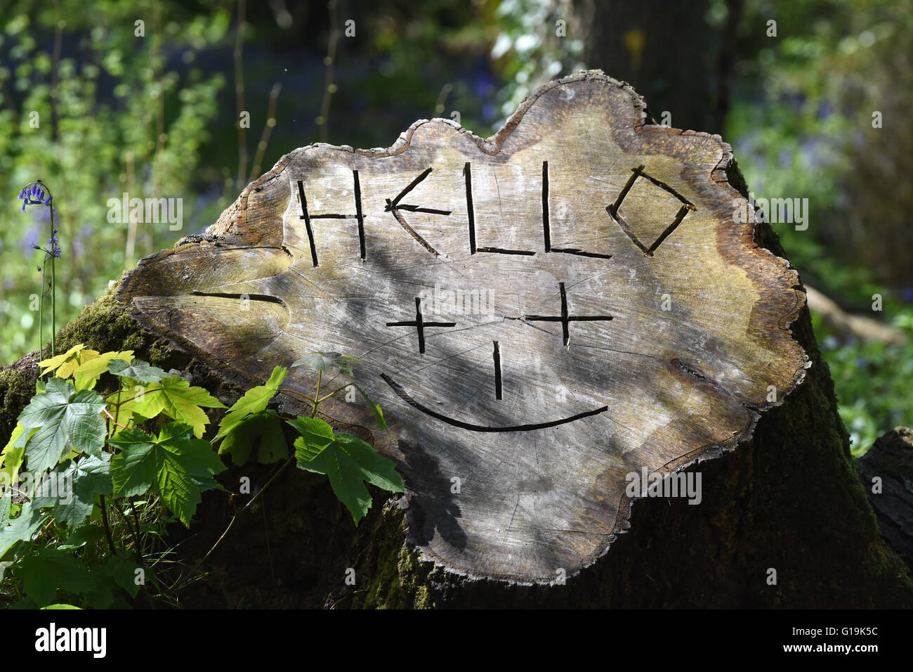 A smiley face, Hello carving on a tree stump in English countryside, Devon. - Stock Image