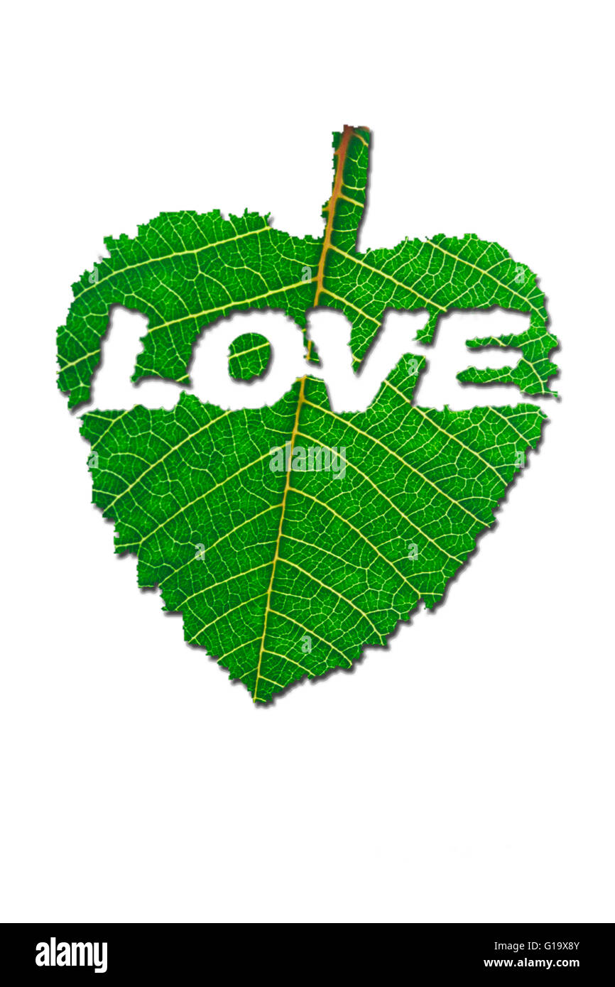 Written Love Carved in Leaf - Stock Image